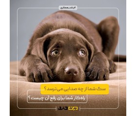 پنج صدایی که سگها را آزار میدهد