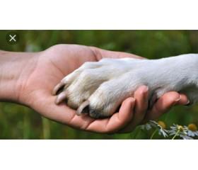 عشق، انسان و حیوانات