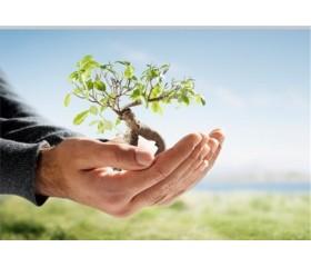 درخت بکارید، کوپن تخفیف 10درصدی هدیه بگیرید