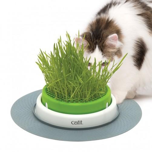 ظرف مخصوص بذر علف گربه Catit Senses 2.0