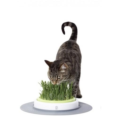 علف گربه با ظرف مخصوص/ Grass Garden Kit