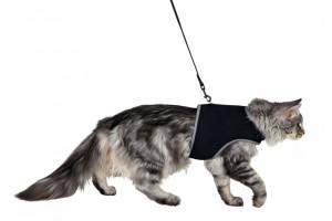 قلاده کمری گربه همراه با بند/ مشکی