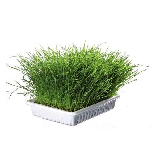 علف نرم گربه/ Soft Grass
