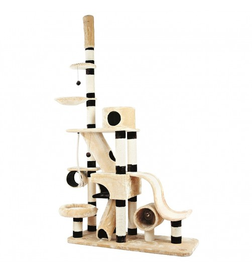 درخت گربه مدل Munera