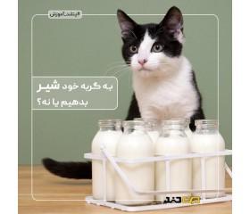 به گربه خود شیر بدهیم یا نه؟